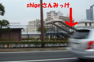 8.shigeさんみっけ.jpg