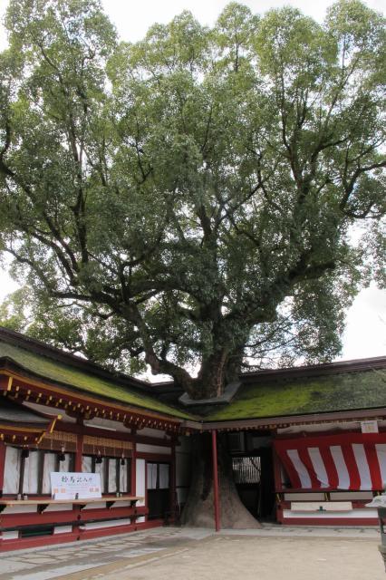 巨木も多い (1).jpg