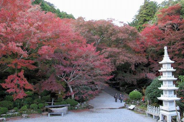 紅葉が綺麗.jpg